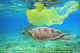 turtleandplasticbag