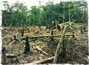 amazondeforestation