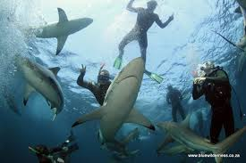 sharkpark