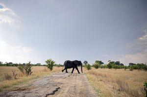 elephantforsale