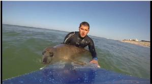 sealsurfer