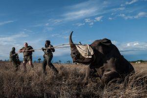 southafricanrhinos